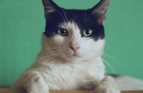 Η γάτα μου, αυτός ο σοφός, γευσιγνώστης δάσκαλος