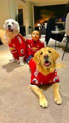 Μαζί με τον Σάντσες, πήραν μεταγραφή και τα σκυλιά του!
