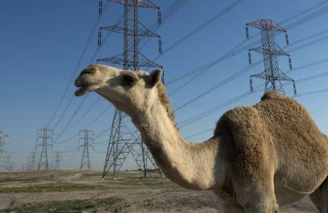 """Ο Σαχίν η καμήλα, ο νέος """"προφήτης"""" του Μουντιάλ (VIDEO)"""