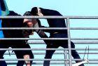 ΤΕΛΙΚΟΣ ΚΥΠΕΛΛΟΥ ΕΛΛΑΔΑΣ / ΕΠΕΙΣΟΔΙΑ / ΚΑΡΕ ΚΑΡΕ Η ΣΤΙΓΜΗ ΤΟΥ ΜΑΧΑΙΡΩΜΑΤΟΣ ΤΟΥ ΟΠΑΔΟΥ ΤΗΣ ΑΕΚ (Eurokinissi Sports)