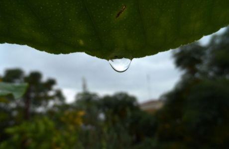 Στάλες βροχής πάνω σε φύλλο από δέντρο λεμονιάς κατα την διάρκεια βροχόπτωσης στην πόλη των Τρικάλων. (EUROKINISSI/ΘΑΝΑΣΗΣ ΚΑΛΛΙΑΡΑΣ)