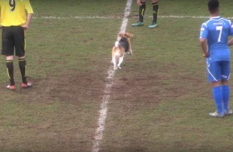 """Σκύλος-εισβολέας έδωσε """"σόου"""" σε ποδοσφαιρικό γήπεδο!"""