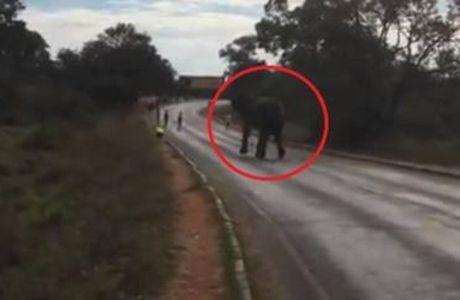 Ελέφαντας σκόρπισε τον ΤΡΟΜΟ σε μαραθωνοδρόμο!
