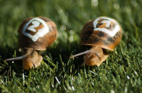 Αγώνες δρόμου σαλιγκαριών: Το σπορ που τερματίζει τη λογική