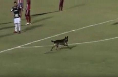 Σκύλος ο... φταίχτης για την ήττα!