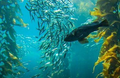 Το μυστικό για να χάσεις κιλά βρίσκεται στον… βυθό της θάλασσας