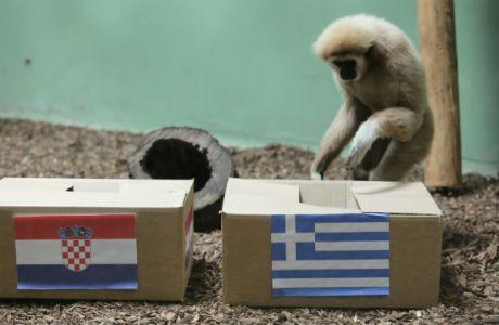 Ποιο χταπόδι και ποιος ελέφαντας; Η μαϊμού Κεντ διάλεξε Ελλάδα!