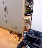 Το διαμέρισμα του Ντεμπελέ στο Ντόρτμουντ.