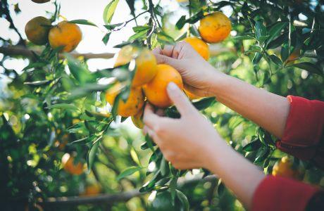 Οι πιο γευστικοί και πρωτότυποι χυμοί που μπορείτε να απολαύσετε το καλοκαίρι