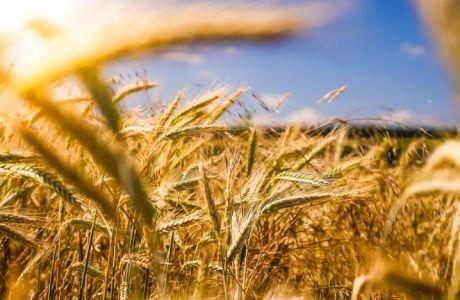 Ζυμαρικά: Έτσι το χρυσό σιτάρι μεταμορφώνεται στο αγαπημένο φαγητό μικρών και μεγάλων