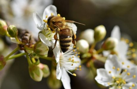Τα είδη που απειλούνται περισσότερο με εξαφάνιση λόγω της κλιματικής αλλαγής