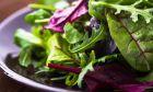 12 προτάσεις για σαλάτες που θα κάνουν τη διατροφή σας πιο απολαυστική από ποτέ