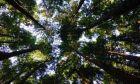 Τράπεζα Πειραιώς: Στρατηγική δέσμευση για την υποστήριξη της βιώσιμης ανάπτυξης